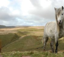 pen y fan pony